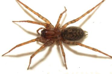 Désinsectisation araignées